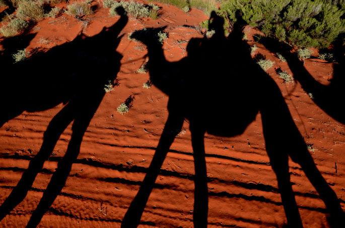 Ayers Rock: passeggiate sul cammello