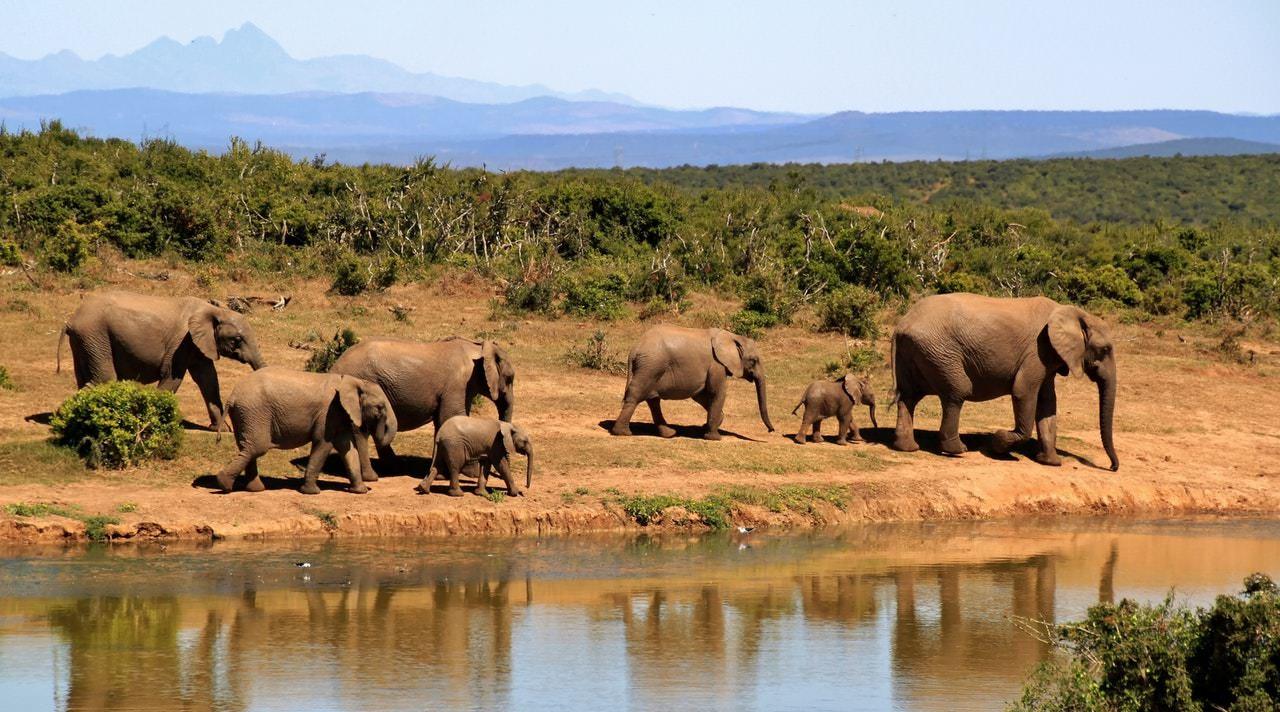 Safari di lusso